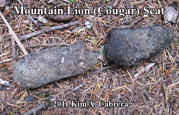 mountain lion, cougar, puma scat found in                   Washington