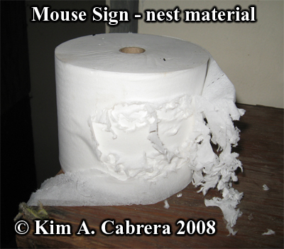 Mouse sign. Shredded tissue. Photo copyright Kim A. Cabrera 2008.