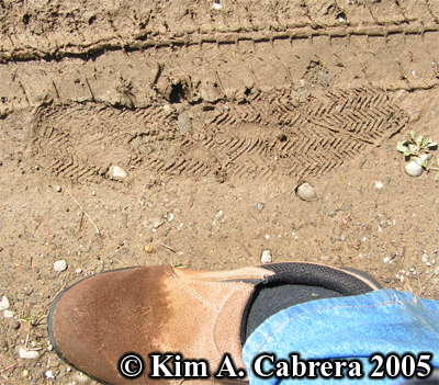 Signature track left by one of the criminals. Photo                 copyright Kim A. Cabrera 2005.